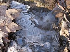 IMG_6063 (Ellen Bulger) Tags: winter ice nature woods connecticut woodbridge wepawaugriver