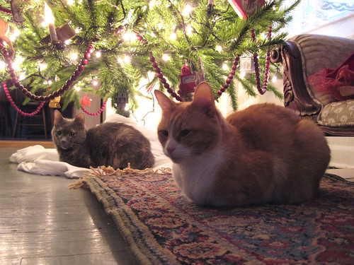 Two Comfy Christmas Kitties