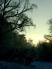 Pure Clarity (At Midnight) Tags: park trees snow france arbres neige parc valenciennes luminosity luminosit