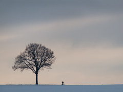 Lonely Biker (explored) (Marc Gommans) Tags: tree bike flickr sneeuw nederland thenetherlands boom estrellas biker landschap snowylandscape fietser zuidlimburg zd explored bicycled winter2010 flickraward platinumheartaward marcgommans quarzoespecial fotoclubvenray zuiko40150mk1 olympusep2 mygearandmepremium