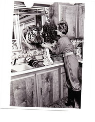 ROAR The Movie - Tippi Hedren (roar the movie) Tags: kitchen movie tiger lion roar dishwashing tippihedren tippi hedren