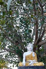 Buddhu under his tree (ocean jeff) Tags: voyage travel burma buddhism myanmar birmanie mandaley