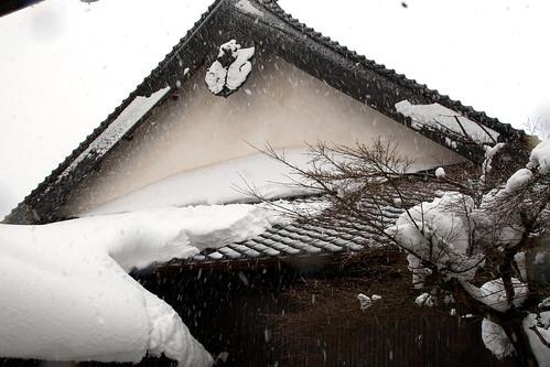 2011年正月〜大雪の順光寺境内
