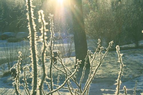 Heavenly winterlight