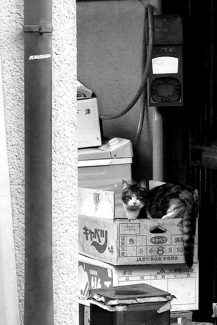 Today's Cat@2011-01-02