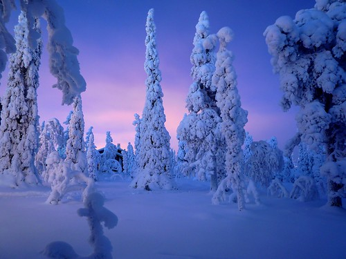 [フリー画像] 自然・風景, 樹木, 雪, フィンランド, 201101091300