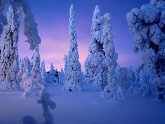 Ruka (timo_w2s) Tags: trees winter snow night forest finland snowy lapland kuusamo ruka creativecommonscentral pwwinter