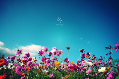 (nodie26) Tags: light flower color beautiful tour feel taiwan   hualien                   aplusphoto