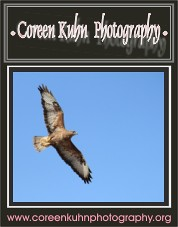 Coreen Kuhn Photography