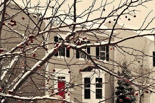 home ~ winter 2011