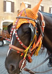 Rome - Winter in Rome (Luigi Strano) Tags: horses italy rome roma animals europe cavalli animali lazio galope latium