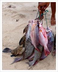 Desa Jimbaran , Bali . (Franc Le Blanc .) Tags: bali fish indonesia asia pantai ikan jimbaran
