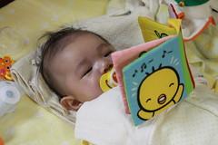 本読むとらちゃん