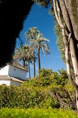 Séville / Jardin de l'Alcazar / Fénêtre végétale (Sébastien Lucas) Tags: jardin alcazar paysage séville palmier oranger andalousie cielbleu tuilecanal fenêtrevégétale jardinméditerranéen pavillondejardin jardinaraboandalou