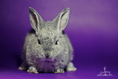My wild rabbit  (  l alshoog36re  IN USA) Tags: wild cute rabbit nikon doha qatar     d80       alshoog36re