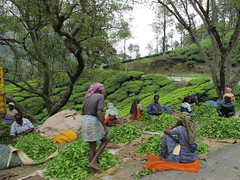 time to rest (neha dara) Tags: plantation bungalow munnar teaestates teapickers