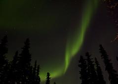 Shimmer (Lee Petersen) Tags: alaska ak aurora fairbanks northernlights auroraborealis 390 d90project