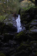 Marin Municipal Water District - Mt. Tam Watershed - Cataract Canyon, unnamed falls Photo