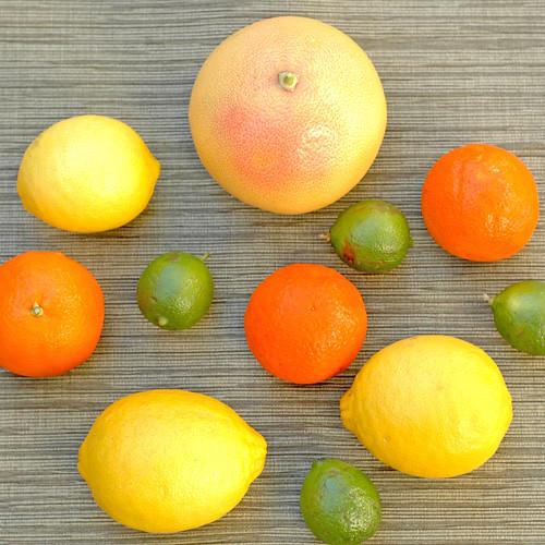 Citrus, Citrus, Citrus!