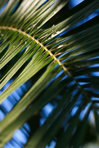 Day 61: Palm frond