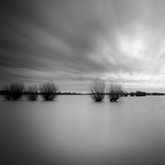 Willow trees flood plain of the river Rhine (Kees Smans) Tags: sky blackandwhite bw art water netherlands clouds river bomen fineart nederland boom willow highwater rijn dutchlandscape waterscape gelderland dikes willowtrees wilgen rivier riverrhine floodplain daytimelongexposure hoogwater heteren overbetuwe blackandwhitefineart bwnd110 keessmans wwwbwfineartcom 2011keessmans