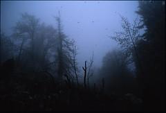 Brouillard lugubre du Vercors (Samuel Raison) Tags: montagne nikon fuji velvia vercors coolscan brouillard autaut