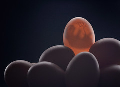 You are the special one... (ewhe...) Tags: canon egg 5d mf huevo bodegon mii strobist tamron90mm25 legacylenses ewhe miradafavorita