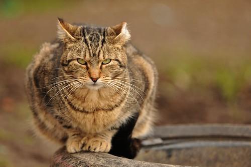 Woodland WA Cats