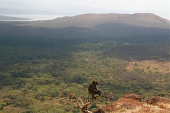 Baboon over Nechi Sar National Park with Abaya Lake, Arba Minch, Ethiopia (Sekitar) Tags: park lake nature beautiful animal landscape monkey national baboon ethiopia arba minch abaya sar alam pemandangan monyet nechi