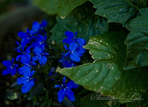 SpringFlowers_09