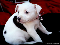 Sweetie (FameShoot Photography) Tags: dog pet friend sunny day park nice puppy animal little small cute sweet