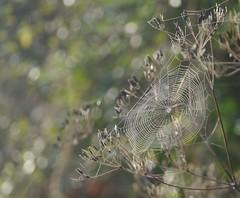 Cob Triangle (pinkpebbleperson) Tags: morning mist walk countryside light cobweb hedgerow triangle
