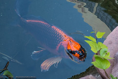 Vegas (MKoneeye) Tags: lasvegas flamingocasino sony rx1002