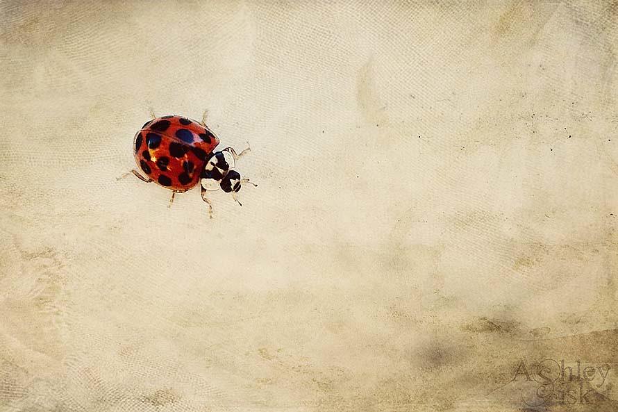 Lady Bug 2 RS
