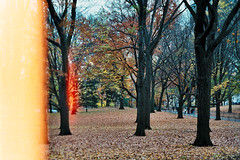 (scott w. h. young) Tags: nyc newyorkcity autumn light fall film 35mm centralpark leak