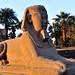 Egypte 06 Luxor (1714)