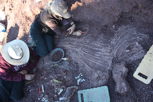 Wet Willi! New Dimetrodon Discovered by HMNS team