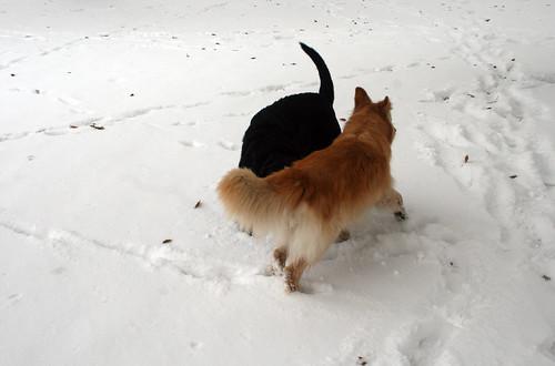 Snow-Nov_10_13