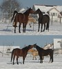 You are my best friend.... (ho.ge) Tags: schnee winter horses snow pferde blueribbonwinner mywinners qualitygold
