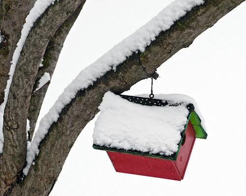 A Wren's Christmas