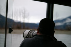 "Dec 11, Fraser River Safari • <a style=""font-size:0.8em;"" href=""http://www.flickr.com/photos/51193137@N08/5258058669/"" target=""_blank"">View on Flickr</a>"