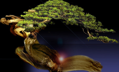 """Bonsai 068 • <a style=""""font-size:0.8em;"""" href=""""http://www.flickr.com/photos/30735181@N00/5261331363/"""" target=""""_blank"""">View on Flickr</a>"""