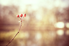Trio. (CarolynsHope) Tags: light berry warm berries bokeh warmth simple carolynshope