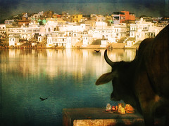 India (ZedZap Photos) Tags: travel india lake reflection reflections lago cow asia desert princess religion holy exotic kings ganesh indie boardwalk glowing shiva pushkar hindu redlight gypsy hindi rajasthan brahma hindutemple nationalgeographic holyman ghats ghat holywater bharatanatyam brahmin maharajah rajput rajasthani travelphotography hindugod holylake desertoasis zedzap hindupuja
