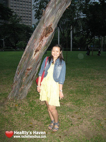 lovely branch tree at ayala triangle gardens