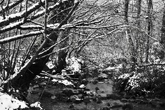 Winter (Malcolm Alce-King) Tags: winter wales river carmarthenshire wfc pontyberem cfw canon40d afongoch gwendraethvalley decembercompetition