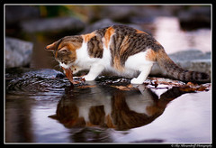 Wet Pussy @ Umeda (Ilko Allexandroff (a.k.a. sir_sky)) Tags: light white hot reflection green wet cat mouth dark photography photo google interesting flickr open emotion good awesome pussy lion yawn picture kitty more most mostinteresting   ilko    catmoments beautyshoots allexandroff