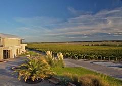 Qué fue lo más relevante para los vinos de la Patagonia en 2010