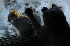 Squirrel!! (momcat14c) Tags: winter snow newjersey squirrel december nj patio gremlin bluecat mercercounty 2010 graycat canon500d rescuedpet gremmie grem canoneosrebelt1i