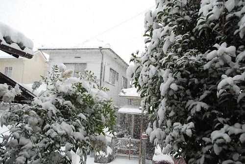 積雪 (大津)